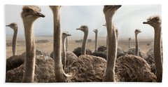 Ostrich Heads Beach Towel by Johan Swanepoel