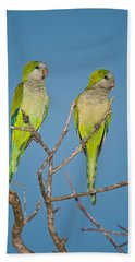 Pair Of Monk Parakeets Myiopsitta Beach Sheet by Panoramic Images