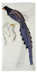 Pica Erythrorhyncha, From A Century Of Birds From The Himalaya Mountains Beach Sheet by Elizabeth Gould