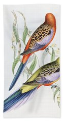 Platycercus Adelaidae From The Birds Of Australia Beach Sheet by John Gould