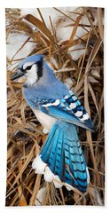 Portrait Of A Blue Jay Beach Sheet by Bill Wakeley