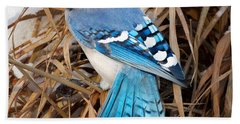 Portrait Of A Blue Jay Square Beach Sheet by Bill Wakeley