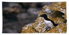 Razorbill Bird Beach Sheet by Dreamland Media