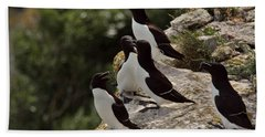 Razorbill Cliff Beach Sheet by Dreamland Media