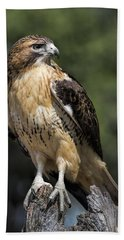Red Tailed Hawk Beach Sheet by Dale Kincaid