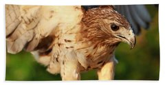 Red Tailed Hawk Hunting Beach Towel by Dan Sproul