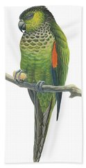 Rock Parakeet Beach Towel by Anonymous