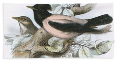 Rose Coloured Starling Beach Sheet by English School