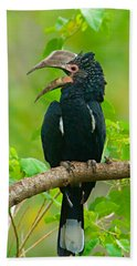 Silvery-cheeked Hornbill Perching Beach Towel by Panoramic Images