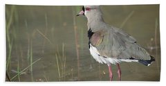 Southern Lapwing In Marshland Pantanal Beach Towel by Tui De Roy