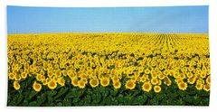 Sunflower Field, North Dakota, Usa Beach Towel by Panoramic Images