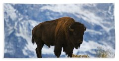 Teton Bison Beach Towel by Mark Kiver