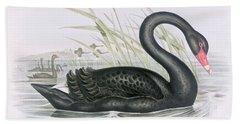 The Black Swan Beach Towel by John Gould