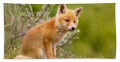 The New Kit ...curious Red Fox Cub Beach Sheet by Roeselien Raimond