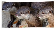 Three Otters Beach Sheet by Daniel Eskridge