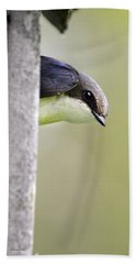 Tree Swallow Closeup Beach Towel by Christina Rollo