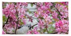 Tufted Titmouse In A Pear Tree Square Beach Towel by Bill Wakeley