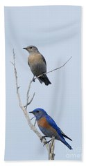 Western Bluebird Pair Beach Towel by Mike  Dawson