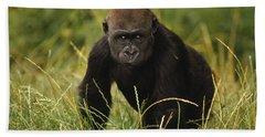 Western Lowland Gorilla Juvenile Beach Towel by Gerry Ellis