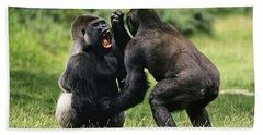 Western Lowland Gorilla Males Fighting Beach Towel by Konrad Wothe