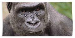 Western Lowland Gorilla Young Male Beach Towel by Gerry Ellis