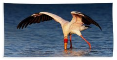 Yellow-billed Stork Hunting For Food Beach Sheet by Johan Swanepoel