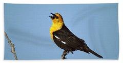 Yellow-headed Blackbird Singing Beach Towel by Tom Vezo