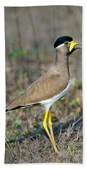 Yellow-wattled Lapwing Vanellus Beach Towel by Panoramic Images