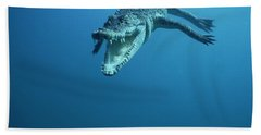 Saltwater Crocodile Crocodylus Porosus Beach Towel by Mike Parry
