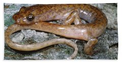 Cave Salamander Beach Sheet by Dante Fenolio