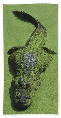 American Alligator Alligator Beach Sheet by Heidi & Hans-Juergen Koch