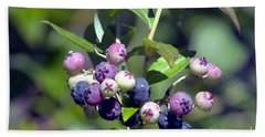 Blueberry Bunch With Raindrops Beach Towel by Sharon Talson