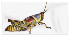 Gaudy Grasshopper Silaka Nature Reserve Beach Sheet by Piotr Naskrecki