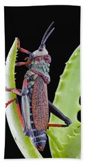 Koppie Foam Grasshopper South Africa Beach Sheet by Piotr Naskrecki