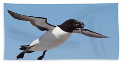 Razorbill In Flight Beach Sheet by Bruce J Robinson