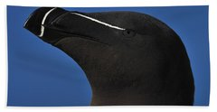 Razorbill Portrait Beach Sheet by Tony Beck