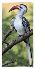 Red-billed Hornbill Beach Towel by Tony Beck