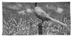 Ringed Neck Pheasant On A Fencepost By A Cornfield Beach Sheet by Randall Nyhof