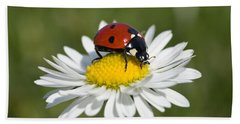 Seven-spotted Ladybird Coccinella Beach Sheet by Konrad Wothe