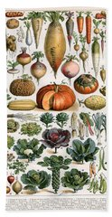 Illustration Of Vegetable Varieties Beach Towel by Alillot