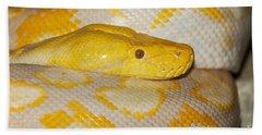 Albino Reticulated Python Beach Towel by Gerard Lacz
