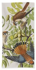 American Sparrow Hawk Beach Towel by John James Audubon