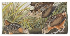American Woodcock Beach Sheet by John James Audubon