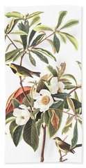 Bachman's Warbler  Beach Sheet by John James Audubon