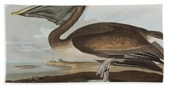 Brown Pelican Beach Towel by John James Audubon
