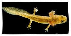 California Giant Salamander Larva Beach Sheet by Dant� Fenolio