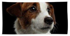 Closeup Portrait Of Jack Russell Terrier Dog On Black Beach Sheet by Sergey Taran