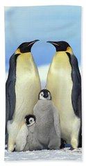 Emperor Penguin Aptenodytes Forsteri Beach Towel by Konrad Wothe