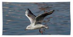 Flying Gull Beach Sheet by Michal Boubin