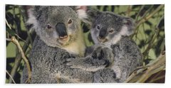 Koala Phascolarctos Cinereus Mother Beach Sheet by Gerry Ellis